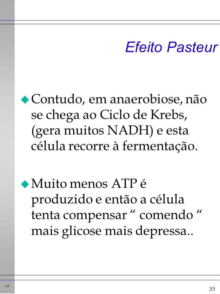 33 WF Efeito Pasteur u Contudo, em anaerobiose, não se chega ao Ciclo de Krebs, (gera muitos NADH) e esta célula recorre à fermentação.