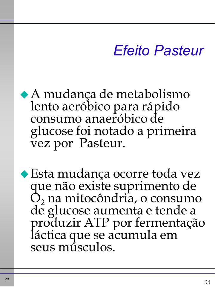 34 WF Efeito Pasteur u A mudança de metabolismo lento aeróbico para rápido consumo anaeróbico de glucose foi notado a primeira vez por Pasteur.
