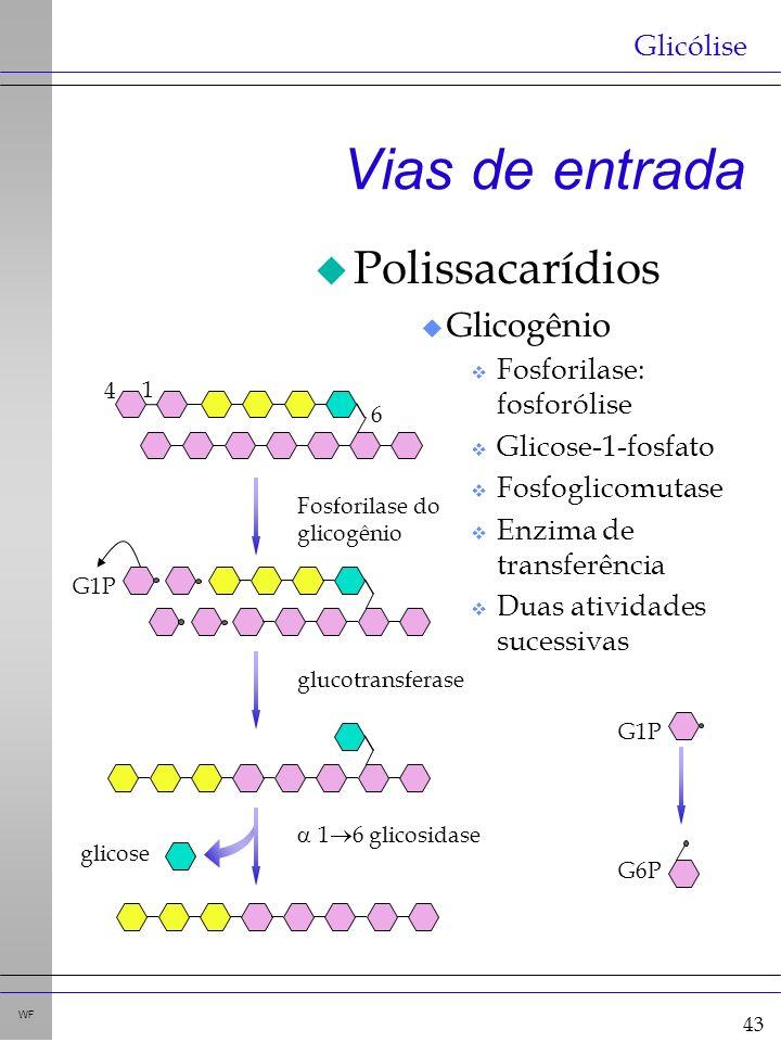 43 WF Vias de entrada u Polissacarídios u Glicogênio v Fosforilase: fosforólise v Glicose-1-fosfato v Fosfoglicomutase v Enzima de transferência v Duas atividades sucessivas Glicólise 4 1 6 Fosforilase do glicogênio G1P glucotransferase 1 6 glicosidase glicose G1P G6P
