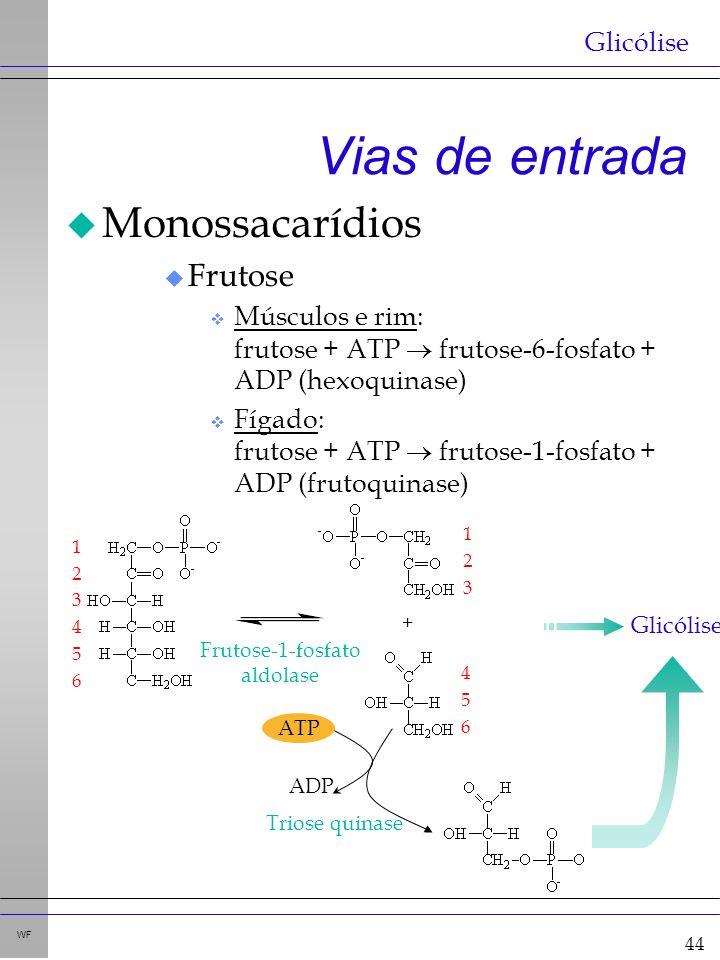 44 WF Vias de entrada u Monossacarídios u Frutose v Músculos e rim: frutose + ATP frutose-6-fosfato + ADP (hexoquinase) v Fígado: frutose + ATP frutose-1-fosfato + ADP (frutoquinase) Glicólise 1 2 3 4 5 6 1 2 3 4 5 6 + Frutose-1-fosfato aldolase ATP ADP Triose quinase