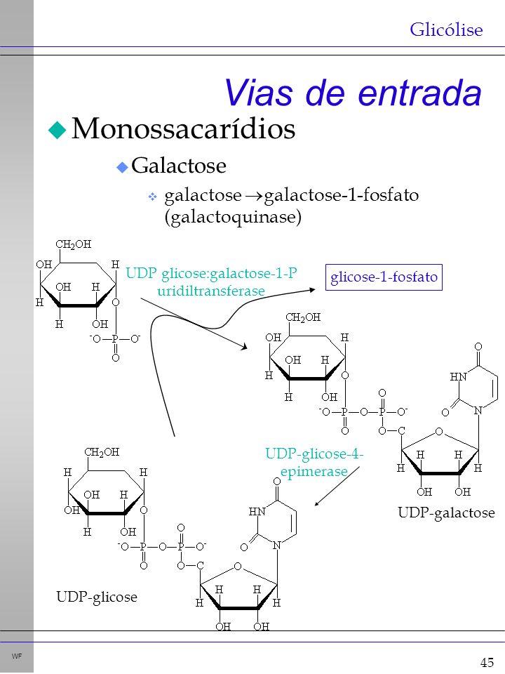45 WF Vias de entrada u Monossacarídios u Galactose v galactose galactose-1-fosfato (galactoquinase) Glicólise UDP glicose:galactose-1-P uridiltransferase UDP-galactose UDP-glicose-4- epimerase UDP-glicose glicose-1-fosfato