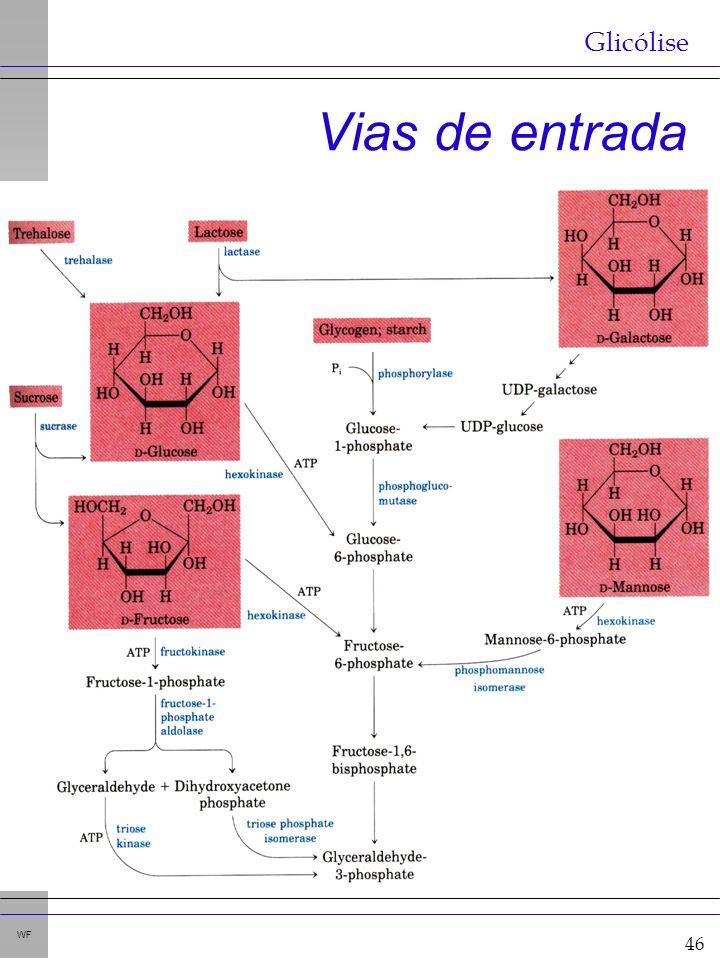 46 WF Vias de entrada Glicólise