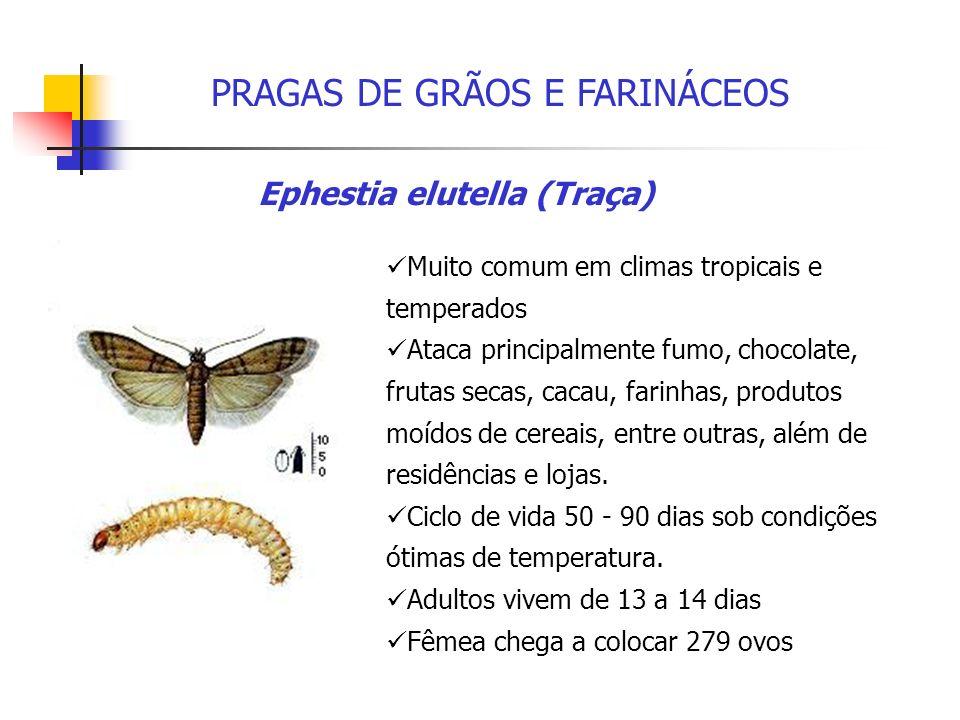 PRAGAS DE GRÃOS E FARINÁCEOS Importante praga de cereais, frutas secas, armazéns, moinhos e plantas processadoras de alimentos.