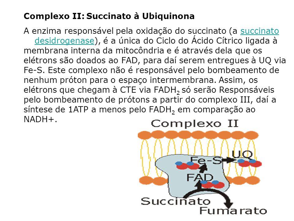 Complexo II: Succinato à Ubiquinona A enzima responsável pela oxidação do succinato (a succinato desidrogenase), é a única do Ciclo do Ácido Cítrico l
