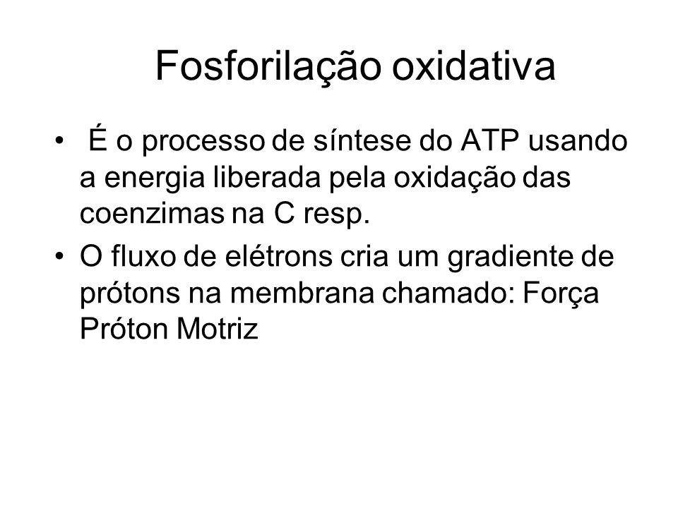 Fosforilação oxidativa É o processo de síntese do ATP usando a energia liberada pela oxidação das coenzimas na C resp. O fluxo de elétrons cria um gra