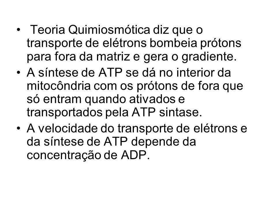 Teoria Quimiosmótica diz que o transporte de elétrons bombeia prótons para fora da matriz e gera o gradiente. A síntese de ATP se dá no interior da mi