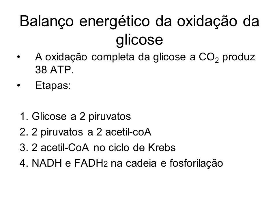 Balanço energético da oxidação da glicose A oxidação completa da glicose a CO 2 produz 38 ATP. Etapas: 1. Glicose a 2 piruvatos 2. 2 piruvatos a 2 ace