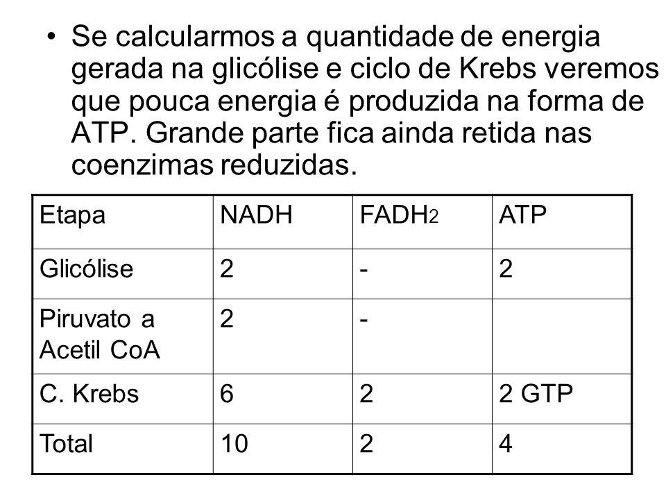 Se calcularmos a quantidade de energia gerada na glicólise e ciclo de Krebs veremos que pouca energia é produzida na forma de ATP. Grande parte fica a