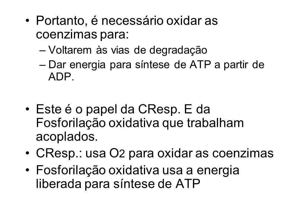 Portanto, é necessário oxidar as coenzimas para: –Voltarem às vias de degradação –Dar energia para síntese de ATP a partir de ADP. Este é o papel da C