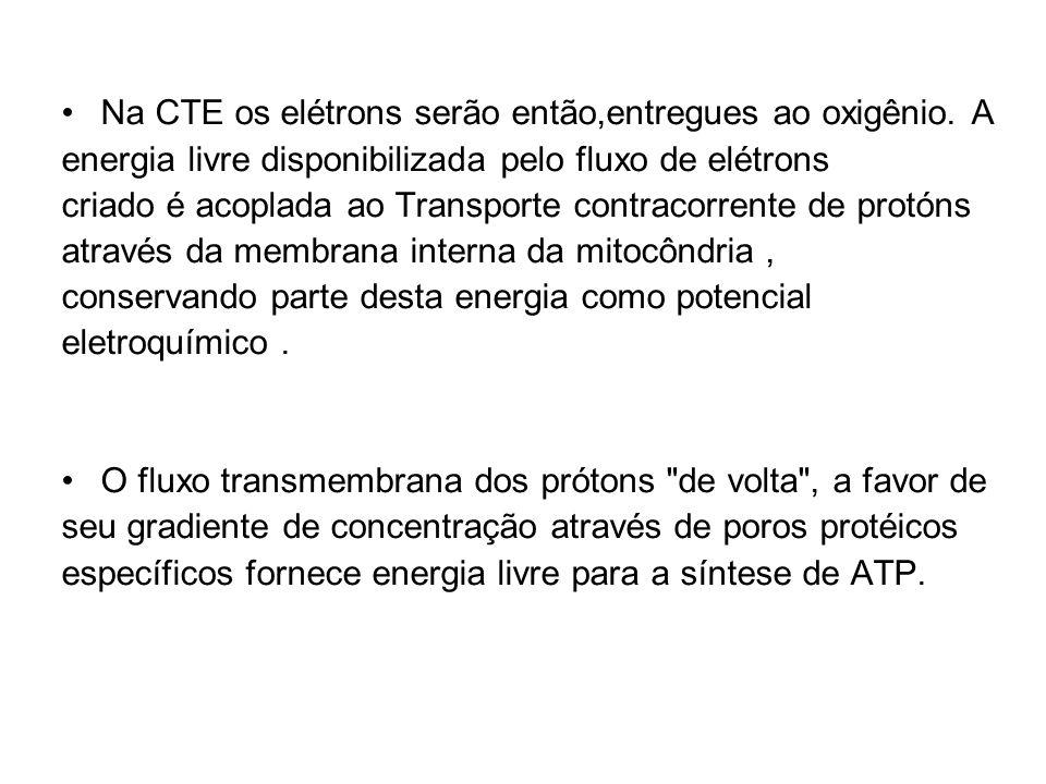 Na CTE os elétrons serão então,entregues ao oxigênio. A energia livre disponibilizada pelo fluxo de elétrons criado é acoplada ao Transporte contracor