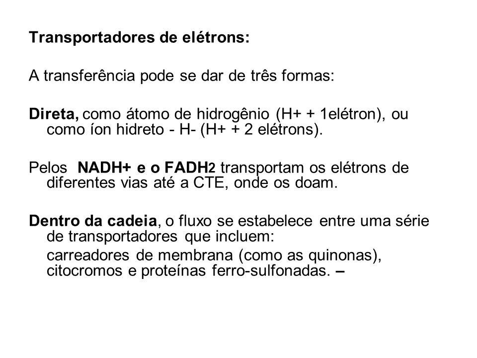 Transportadores de elétrons: A transferência pode se dar de três formas: Direta, como átomo de hidrogênio (H+ + 1elétron), ou como íon hidreto - H- (H