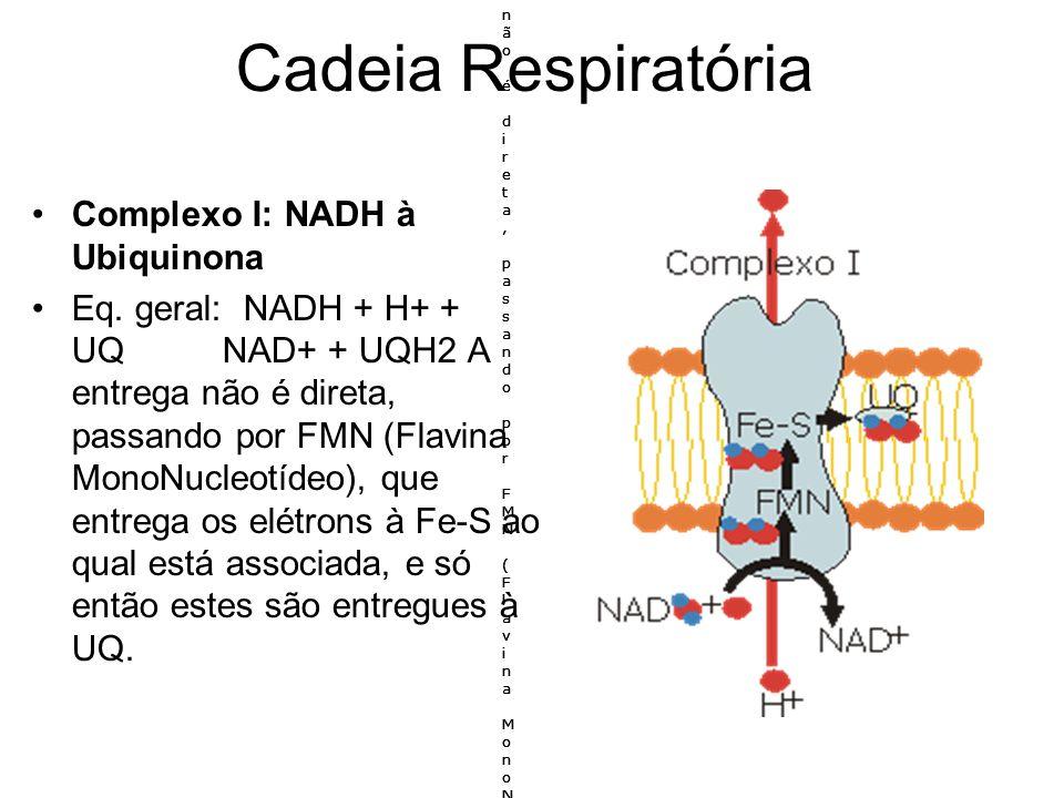 Cadeia Respiratória Complexo I: NADH à Ubiquinona Eq. geral: NADH + H+ + UQ NAD+ + UQH2 A entrega não é direta, passando por FMN (Flavina MonoNucleotí