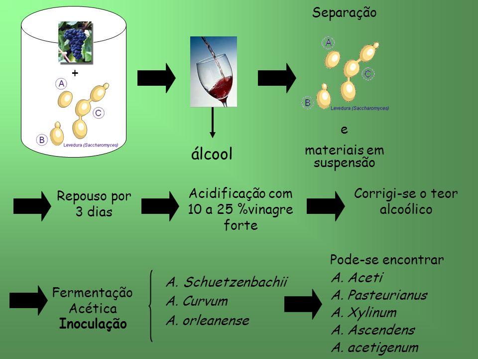 álcool Separação e materiais em suspensão + Repouso por 3 dias Acidificação com 10 a 25 %vinagre forte Corrigi-se o teor alcoólico Fermentação Acética Inoculação A.Schuetzenbachii A.