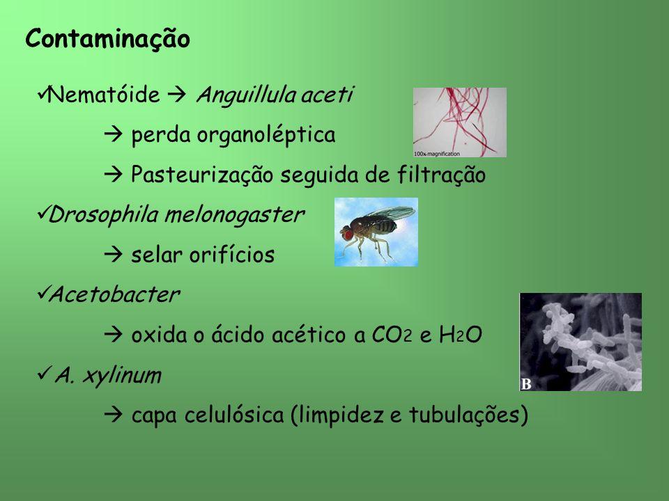 Contaminação Nematóide Anguillula aceti perda organoléptica Pasteurização seguida de filtração Drosophila melonogaster selar orifícios Acetobacter oxida o ácido acético a CO 2 e H 2 O A.
