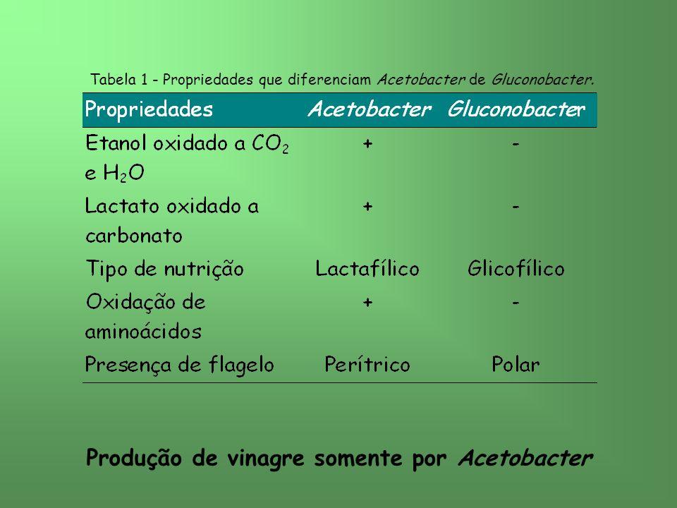 Tabela 1 - Propriedades que diferenciam Acetobacter de Gluconobacter. Produção de vinagre somente por Acetobacter