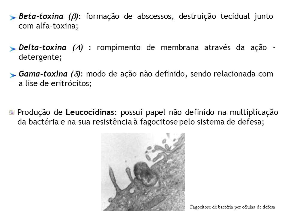 Delta-toxina ( ) : rompimento de membrana através da ação - detergente; Gama-toxina ( ): modo de ação não definido, sendo relacionada com a lise de er