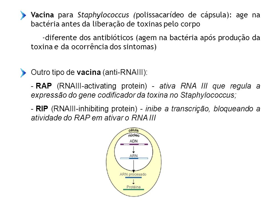 Vacina para Staphylococcus (polissacarídeo de cápsula): age na bactéria antes da liberação de toxinas pelo corpo -diferente dos antibióticos (agem na