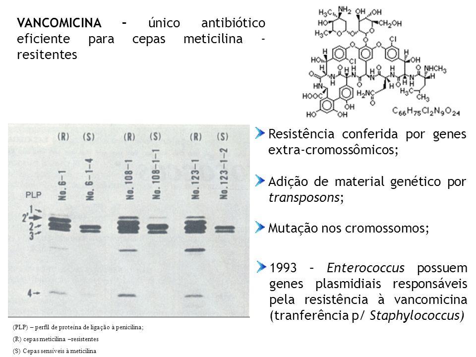 VANCOMICINA – único antibiótico eficiente para cepas meticilina - resitentes Resistência conferida por genes extra-cromossômicos; Mutação nos cromosso