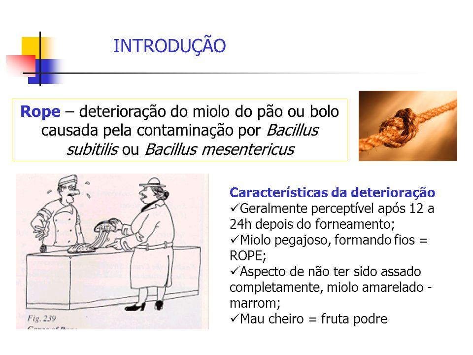 INTRODUÇÃO Rope – deterioração do miolo do pão ou bolo causada pela contaminação por Bacillus subitilis ou Bacillus mesentericus Características da de