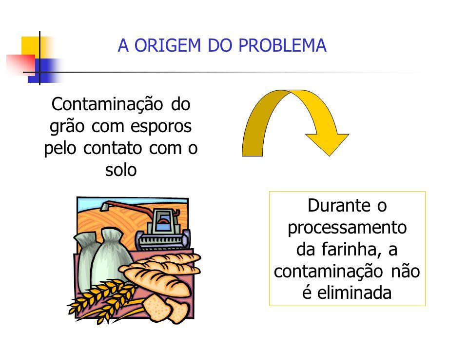 Contaminação do grão com esporos pelo contato com o solo Durante o processamento da farinha, a contaminação não é eliminada A ORIGEM DO PROBLEMA
