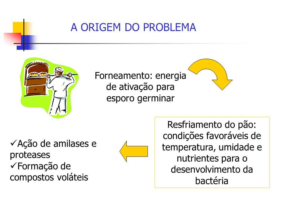 Forneamento: energia de ativação para esporo germinar Resfriamento do pão: condições favoráveis de temperatura, umidade e nutrientes para o desenvolvi