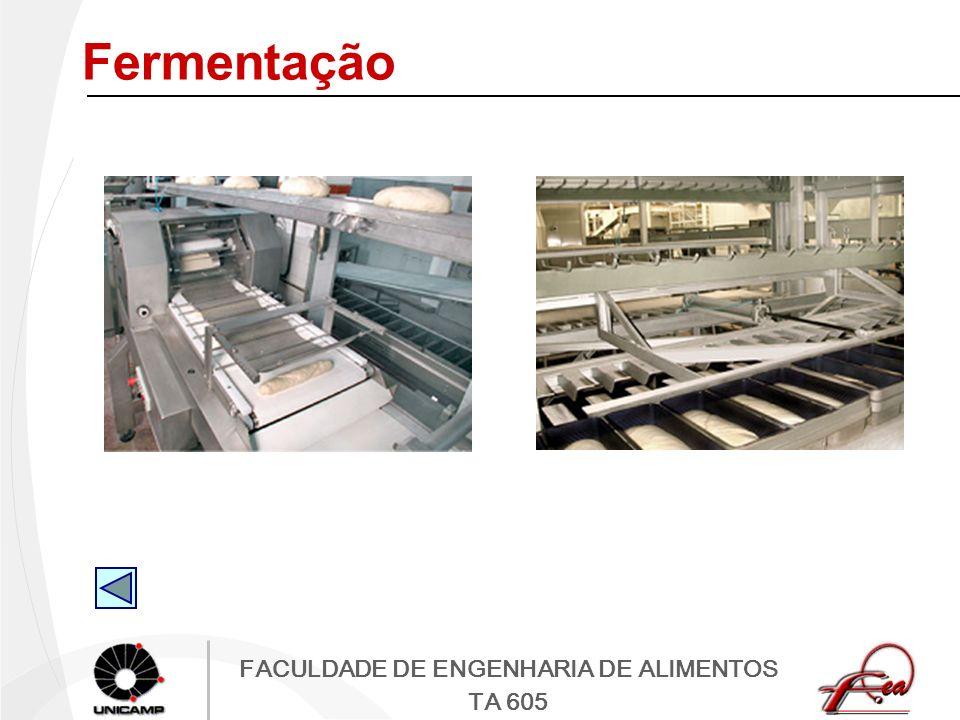 FACULDADE DE ENGENHARIA DE ALIMENTOS TA 605 Fermentação