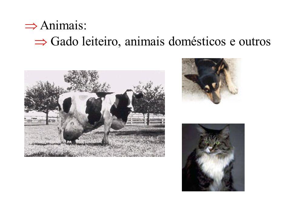 Animais: Gado leiteiro, animais domésticos e outros