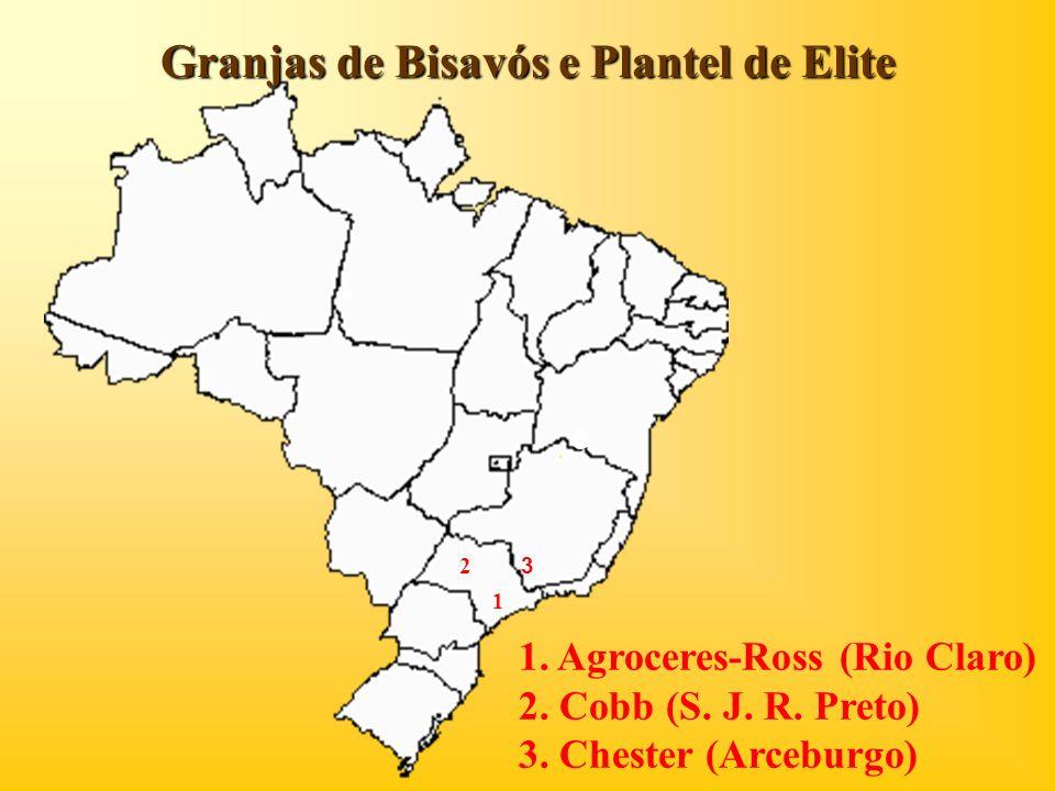 Granjas de Bisavós e Plantel de Elite 1 2 1. Agroceres-Ross (Rio Claro) 2. Cobb (S. J. R. Preto) 3. Chester (Arceburgo) 3