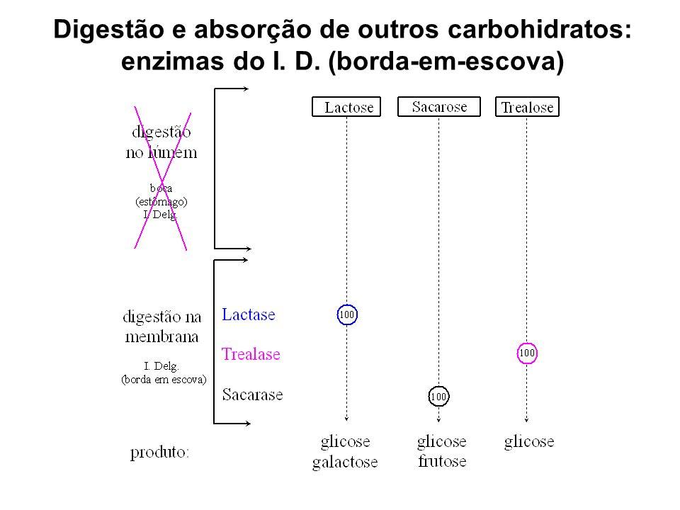 Digestão e absorção de outros carbohidratos: enzimas do I. D. (borda-em-escova)
