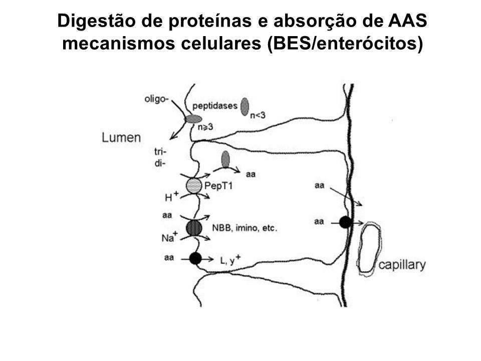 mecanismos celulares (BES/enterócitos)