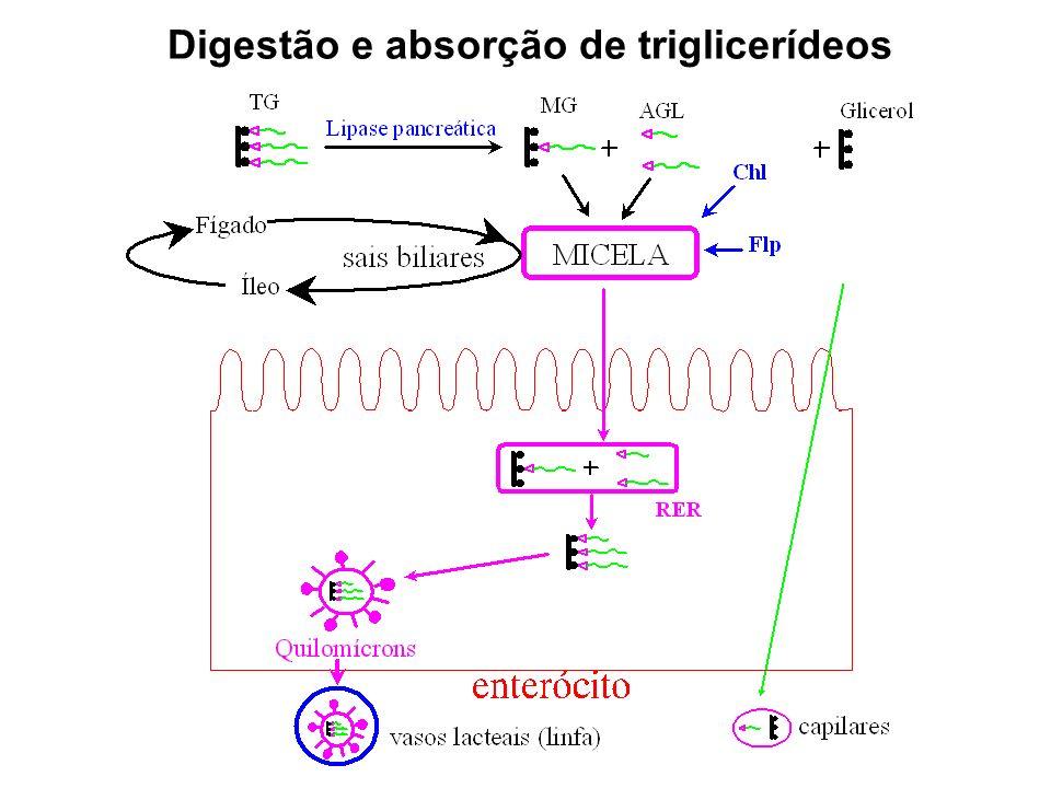 Digestão e absorção de triglicerídeos
