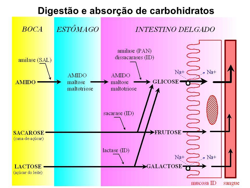 Veja aula on line sobre Micronutrientes: http://www.mds.qmw.ac.uk/biomed/kb/metabolism/Micronutrients_files/frame.htm
