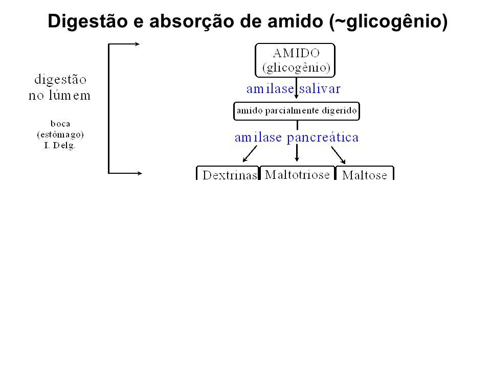 Digestão e absorção de amido (~glicogênio)