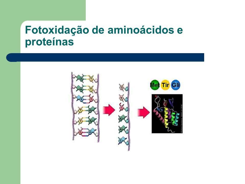 Fotoxidação de aminoácidos e proteínas