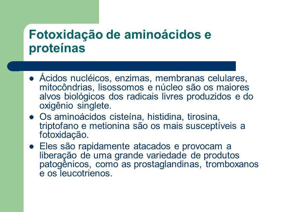 Ácidos nucléicos, enzimas, membranas celulares, mitocôndrias, lisossomos e núcleo são os maiores alvos biológicos dos radicais livres produzidos e do