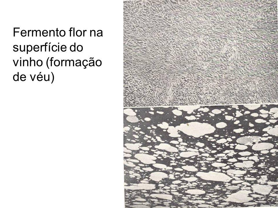 Fermento flor na superfície do vinho (formação de véu)