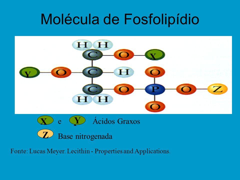 Molécula de Fosfolipídio X X e Y Y Y Z Ácidos Graxos Fonte: Lucas Meyer.