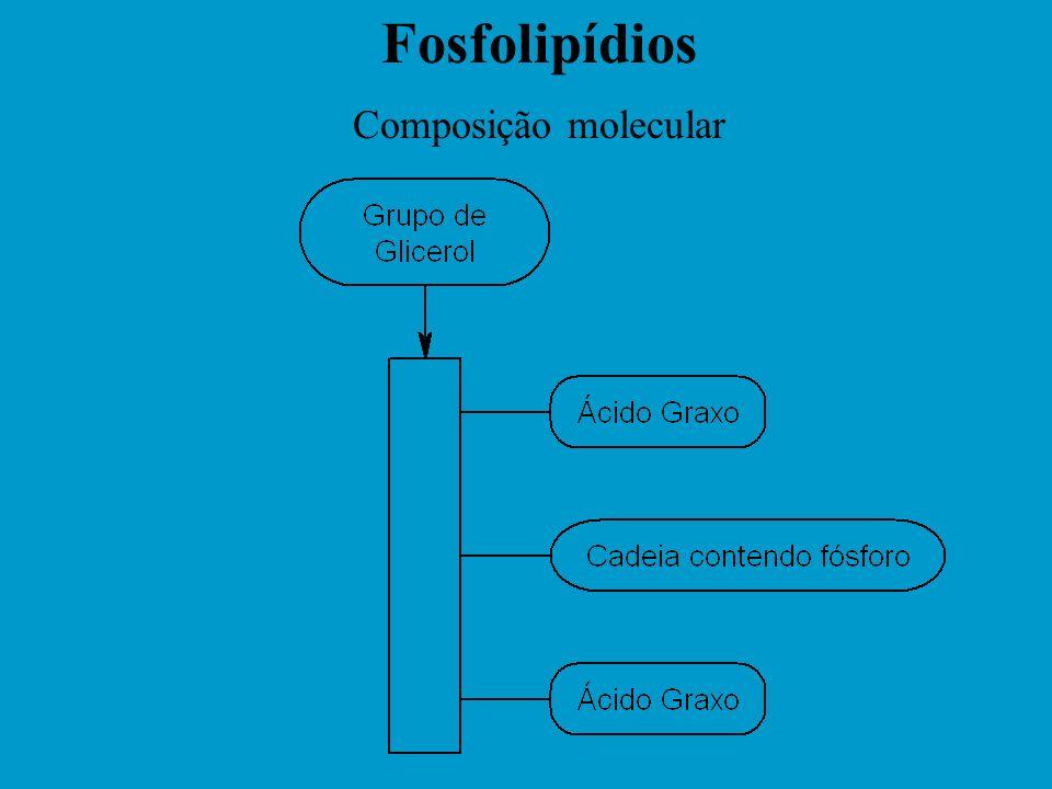 Molécula de Fosfolipídio X X e Y Y Y Z Ácidos Graxos Fonte: Lucas Meyer. Lecithin - Properties and Applications. Base nitrogenada