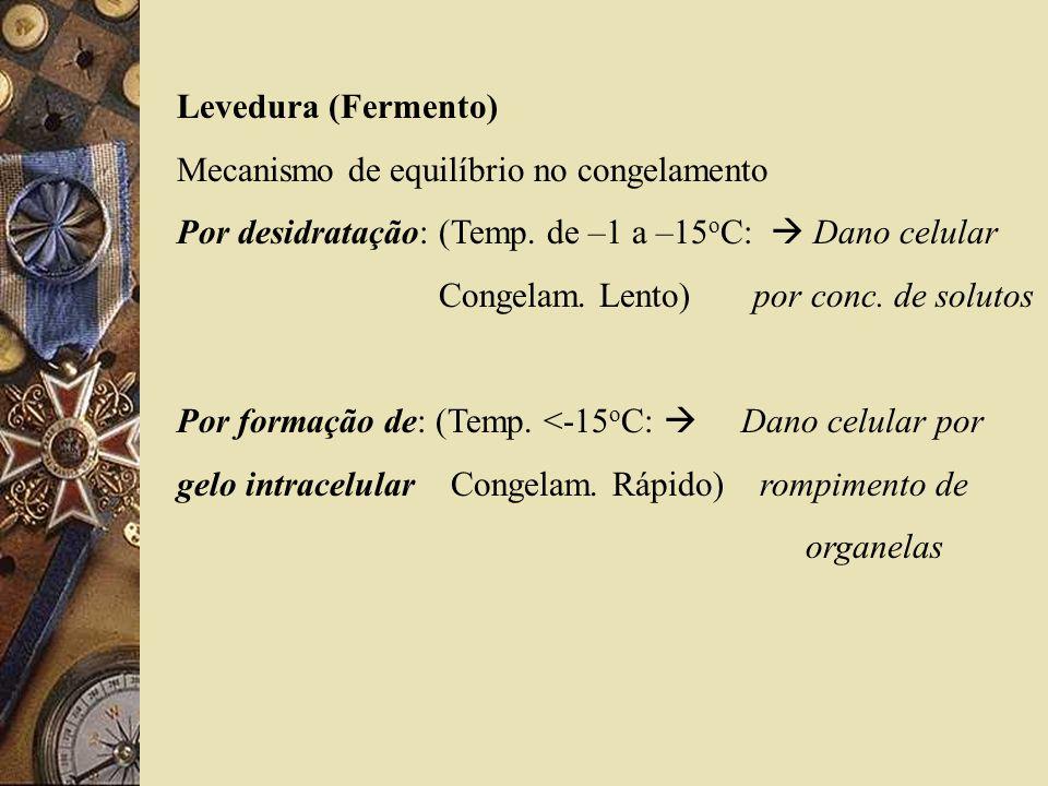 Levedura (Fermento) Mecanismo de equilíbrio no congelamento Por desidratação: (Temp. de –1 a –15 o C: Dano celular Congelam. Lento) por conc. de solut