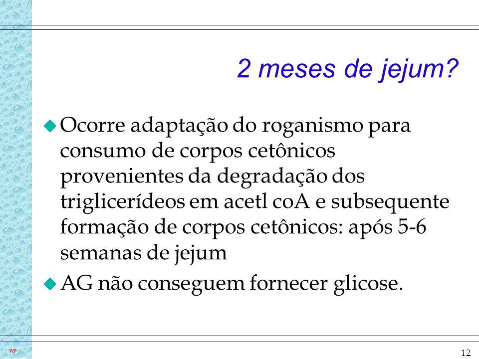 12 WF 2 meses de jejum? u Ocorre adaptação do roganismo para consumo de corpos cetônicos provenientes da degradação dos triglicerídeos em acetl coA e