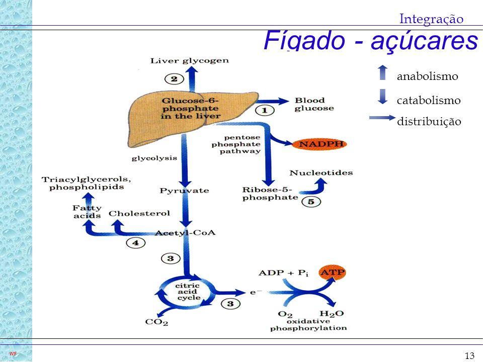 13 WF Fígado - açúcares Integração anabolismo catabolismo distribuição