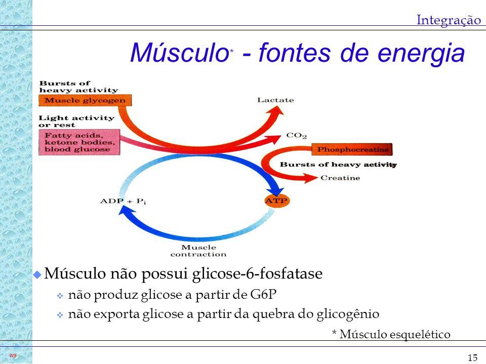 15 WF Integração Músculo * - fontes de energia * Músculo esquelético u Músculo não possui glicose-6-fosfatase v não produz glicose a partir de G6P v n