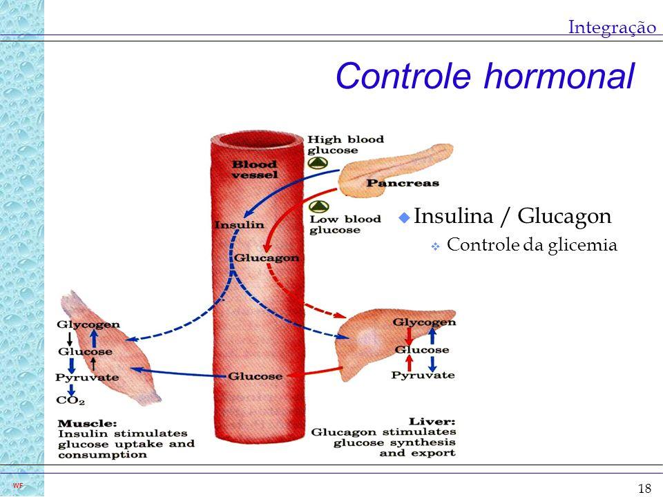 18 WF Integração Controle hormonal u Insulina / Glucagon v Controle da glicemia