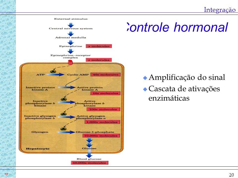 20 WF Integração Controle hormonal u Amplificação do sinal u Cascata de ativações enzimáticas
