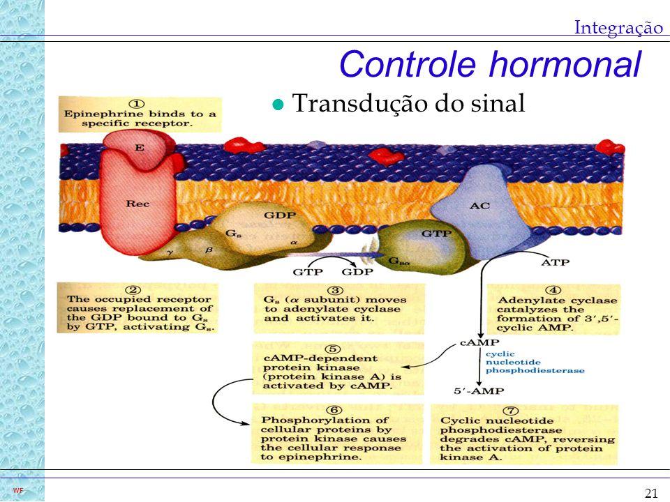 21 WF Integração Controle hormonal l Transdução do sinal