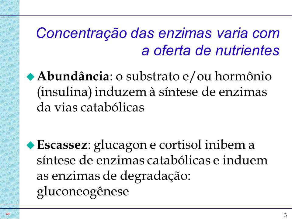 3 WF Concentração das enzimas varia com a oferta de nutrientes u Abundância : o substrato e/ou hormônio (insulina) induzem à síntese de enzimas da via