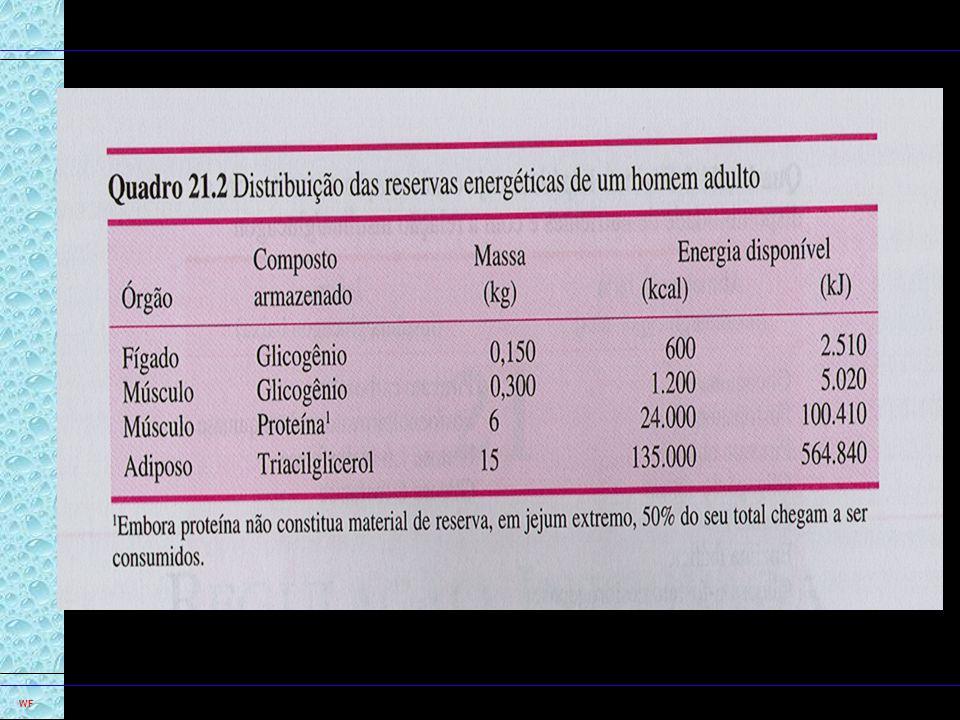17 WF Integração Cérebro - fontes de energia