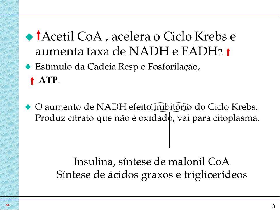 8 u Acetil CoA, acelera o Ciclo Krebs e aumenta taxa de NADH e FADH 2 u Estímulo da Cadeia Resp e Fosforilação, ATP. u O aumento de NADH efeito inibit