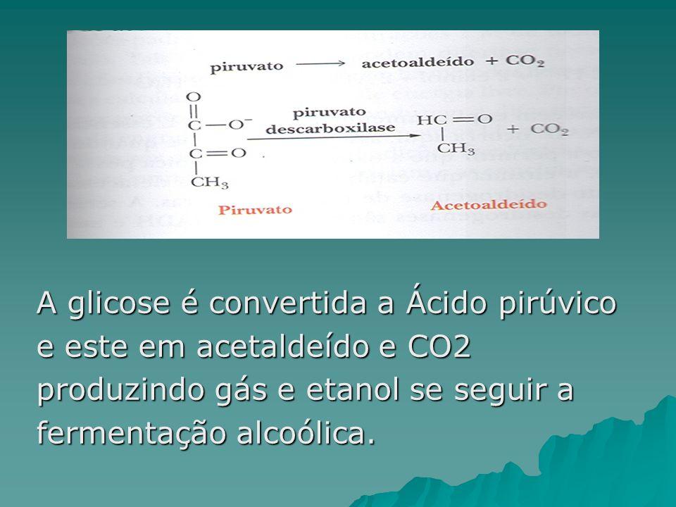 A glicose é convertida a Ácido pirúvico e este em acetaldeído e CO2 produzindo gás e etanol se seguir a fermentação alcoólica.