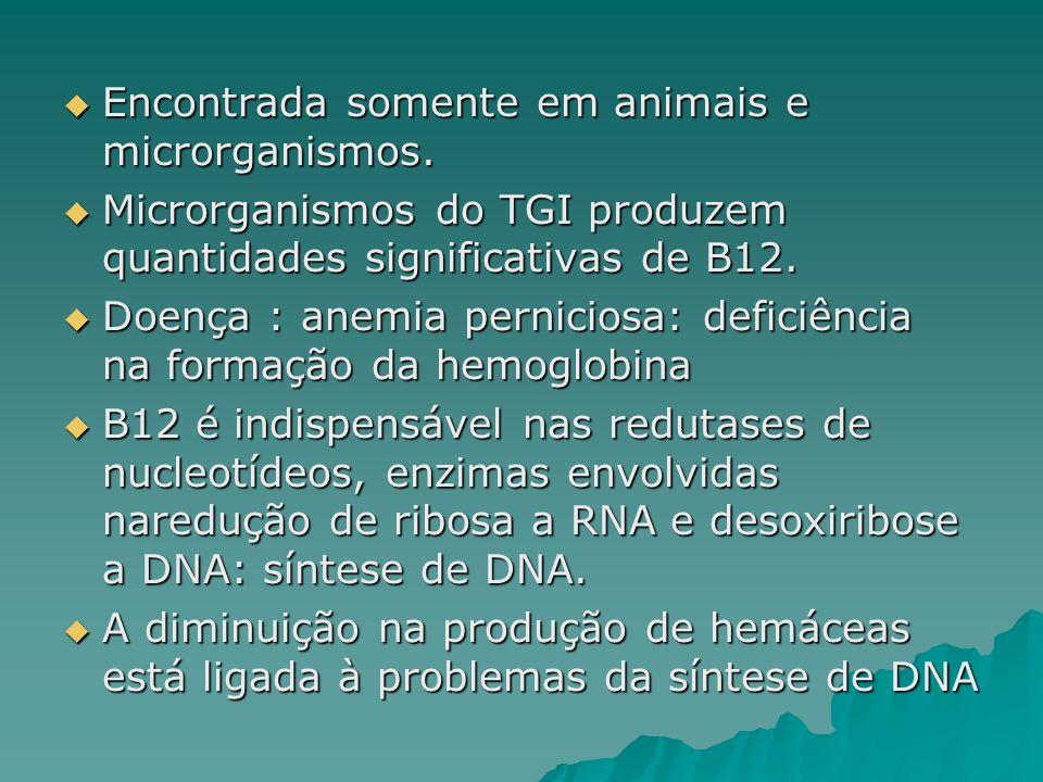Encontrada somente em animais e microrganismos. Encontrada somente em animais e microrganismos. Microrganismos do TGI produzem quantidades significati